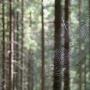 Konkurs fotograficzny pt. 'Leśne inspiracje'